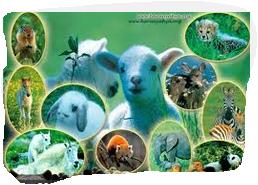 Çocuklar İçin Hayvanlarla İlgili Bilmeceler