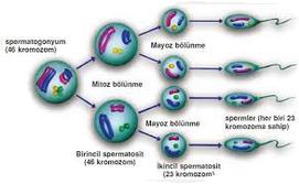 10. Sınıf Biyoloji Doğru Yanlış Çalışma Sayfası