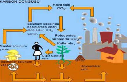 10. Sınıf Biyoloji Doğada Madde Döngüleri