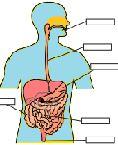 İç Organlarımız Etkinliği