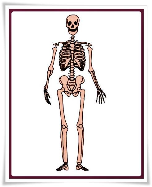 4. Sınıf Fen Bilimleri Dersi Vücudun Bilmecesini Çözelim