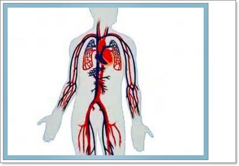 4. Sınıf Fen Bilimleri Dersi Vücudun Bilmecesini Çözelim Kanın Vücutta Dolaşımı