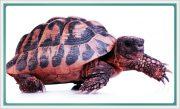 okudugunu-anlama-metinleri-antilop-ve-kaplumbaga