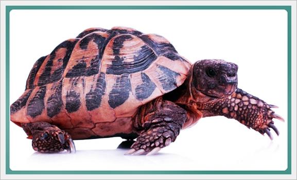 Okuduğunu Anlama Metinleri: Antilop Ve Kaplumbağa
