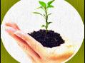 Tohumlar Fidana Videolu Resimli Mutlaka Bakmalısınız